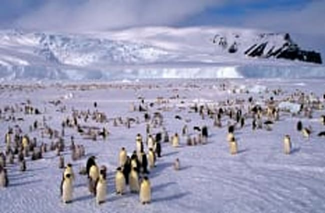 World's biggest marine reserve created in Antarctica