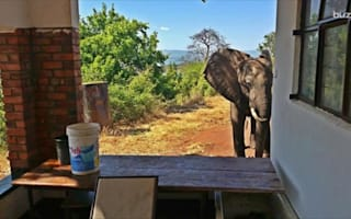 Brave injured elephant seeks out humans for help