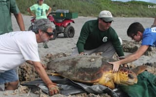 Upside-down sea turtle saved by rescue team