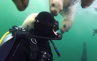 Scuba diver gets up close and personal with sea lions