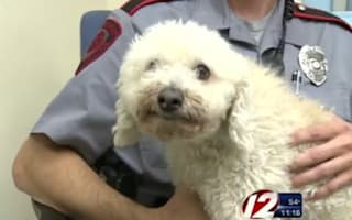 Dog survives 11-mile ride after being hit by car