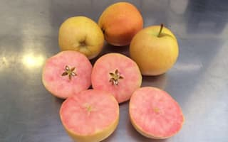 Pink-fleshed apple to be sold by Tesco