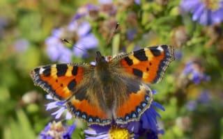Warm summer brings more butterflies to Britain