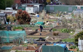 TV gardeners blamed for hike in allotment evictions