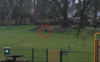 'Mystery monkey' on the loose in Dorset