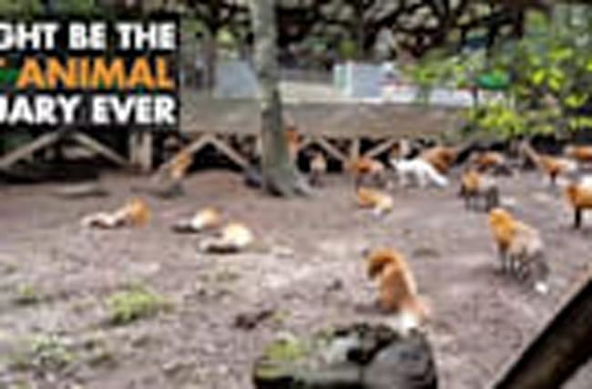 Cutest Animal Sanctuary Ever?