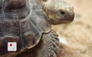 Tortoise blamed for house fire that caused £124k damage
