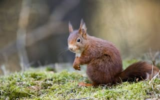 Where to see wildlife in the UK this autumn