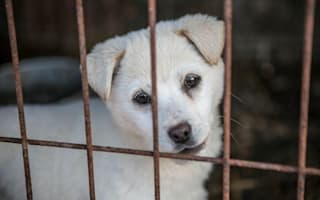 200 dogs rescued from South Korean meat farm