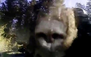 Deputies free bear trapped in car in Colorado