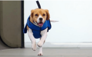 Airline recruits dog to find passengers' lost property