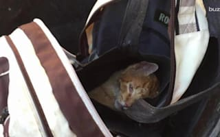 Injured cat rescued after being chucked into a rubbish bin