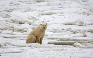 Documentary makers discover polar bear sanctuary in the Arctic