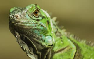 Top tips for keeping exotic pets