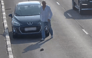 Driver rescues kitten from busy Russian highway