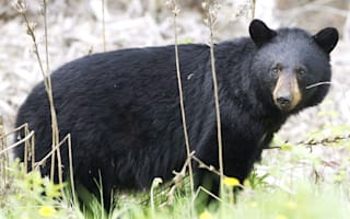 Hiker survives months stranded in woods after bear attack