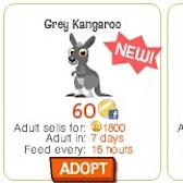 Let the new Happy Pets Kangaroos hop into your life