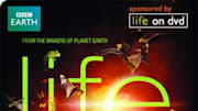 From the makers of 'Planet Earth,' BBC and Discovery Channel, comes 'Life,' an even closer and equally as fascinating look at our earth and the creatures that occupy it. ...