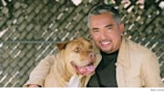 I went to see 'Cesar Millan Live.' Usually when a television writer tells you they went to a television-related event, what they mean is that a publicity contact provi...