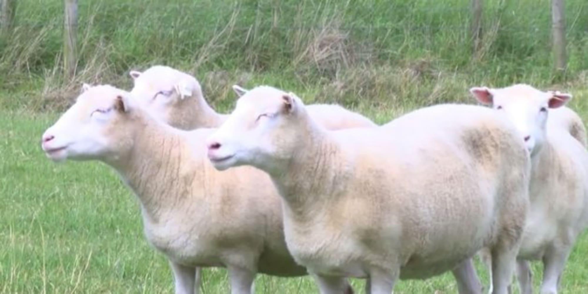 quels sont les animaux clones depuis dolly