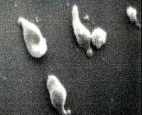 """Artificial life"" created as scientist makes synthetic chromosome"