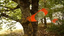 Swiss lab builds lightweight, tree-perching glider robot, swarms to follow