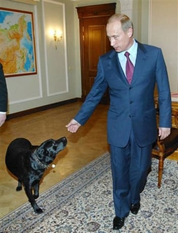 Vladimir Putin finally acquires satellite collar for his dog