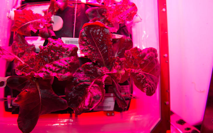 NASA astronauts will eat space-grown veggies for the first time