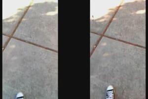 LG Optimus G Sample Video (AT&T Vs. Sprint)