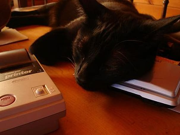 Cute post of the day: kitty naps on DS