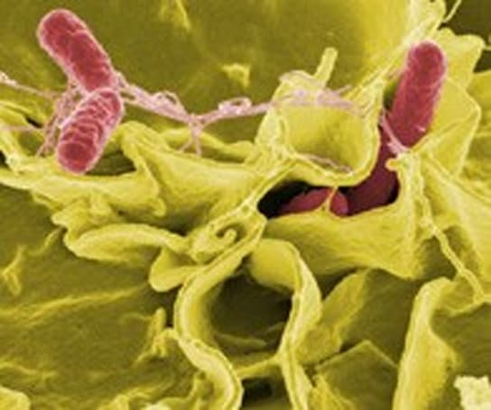 Palm-sized lab could detect food-borne diseases