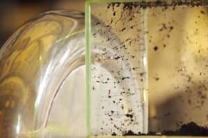 Tesla coil zaps nanotubes into a self-assembling circuit