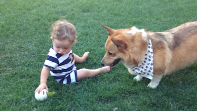 Baby Plays Fetch With Corgi