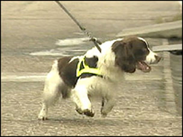 Trained dog sniffs out cellphones in prison