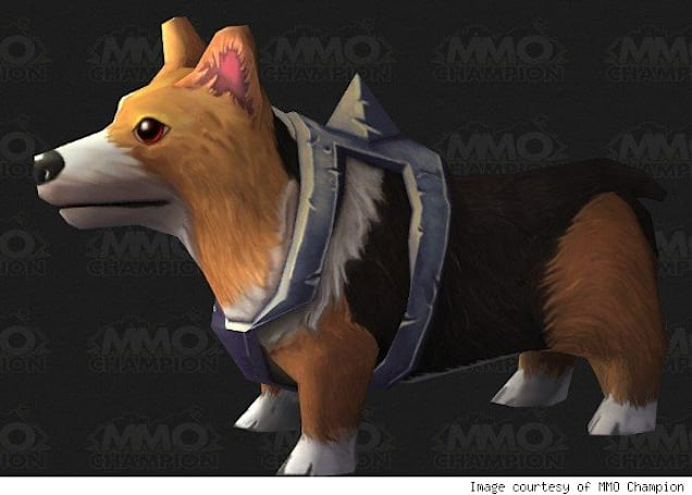 Could it be? A corgi for me?