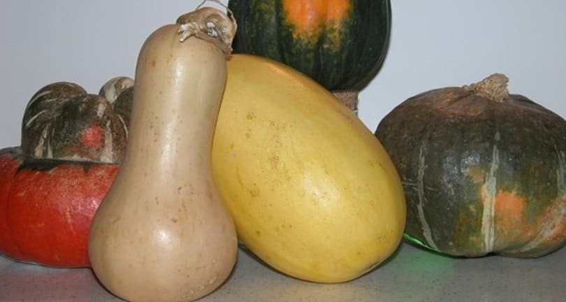 The Daily Quest: Squash