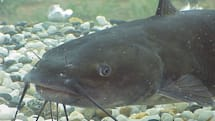MMO Family: Why Catfish is a term your kids should know