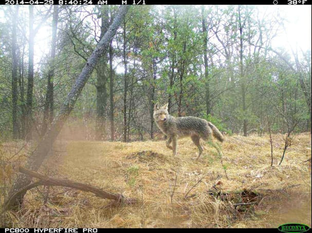 NASA and Wisconsin are covering the state with wildlife cameras