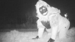 Wildlife Cameras Capture Bizarre Photos