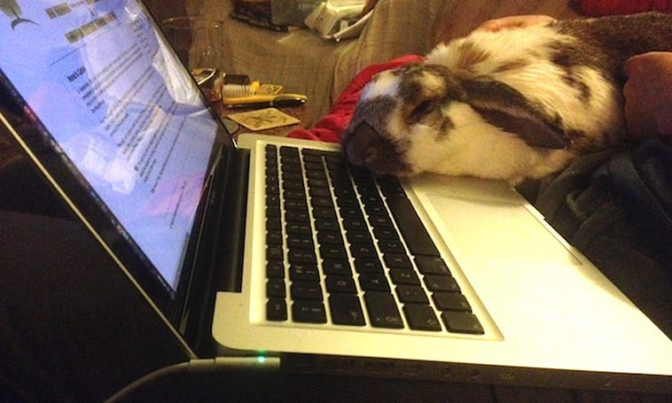 Caturday... or is it Bunday?
