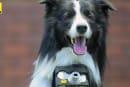 Nikon 想讓你的寵物比你還「用心拍照」,推出犬用心率拍照套件