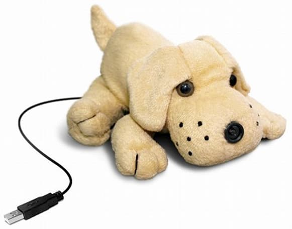 Textorm unloads Puppy Dog Webcam for adoption