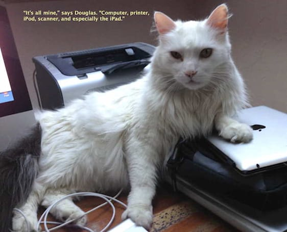 Caturday: Douglas is very possessive of his Apple products
