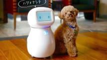 遠隔操作できるホームロボット『シナモン』。見守りや防犯用途を想定、医療向けサービス提供も視野