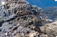Google Street View gets its first underwater panoramic images, ready for desk-based scuba expeditions (video)