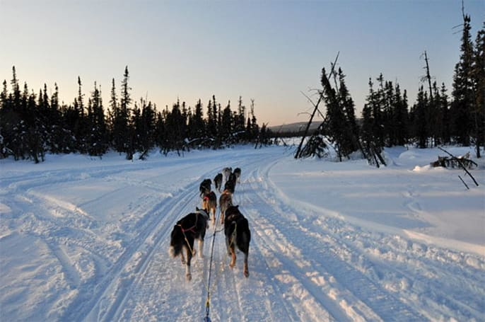 Alaska's Iditarod sled dog race gains GPS, cellphones and live streaming