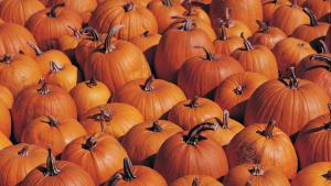 America's Biggest Pumpkin