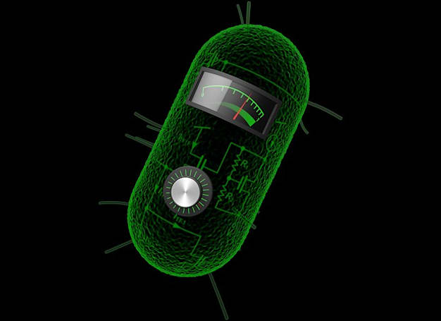 MIT crafts analog circuits from living bacteria