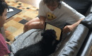 Dog Days of Summer: Iggy and his iPad
