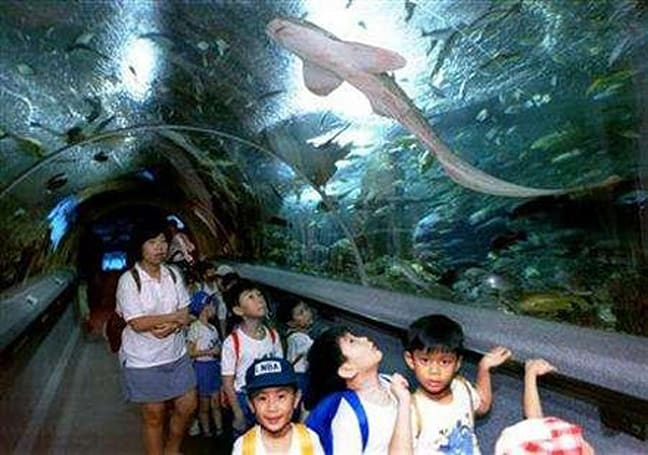 Singapore aquarium tags fish with RFID chips